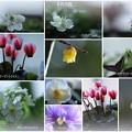 我が家の2月の花(1)