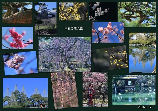 早春の兼六園