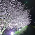 Photos: 伏見川