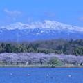 白山と桜2