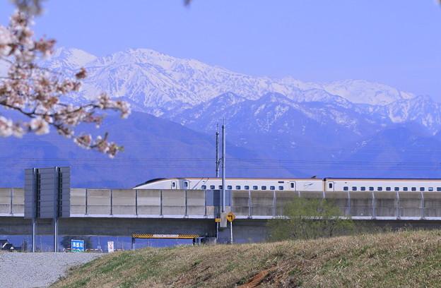 北陸新幹線  立山連峰と桜