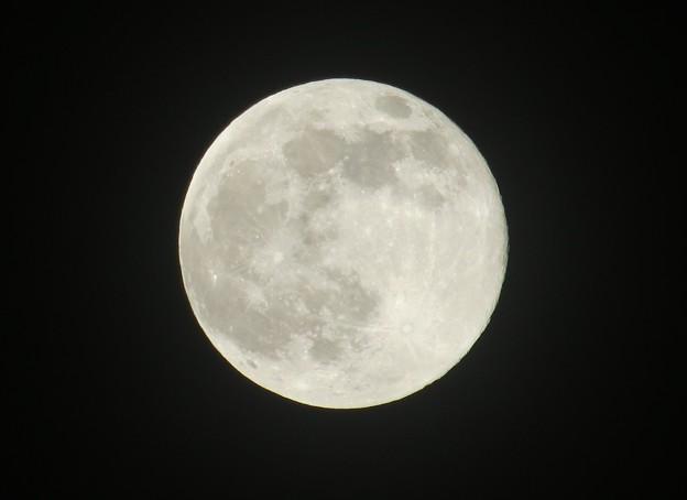 昨晩の月 一年で一番小さな月+ピンクムーン