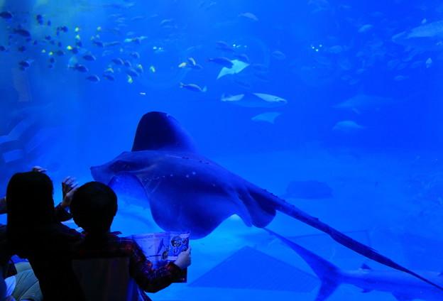 青の世界(1) のとじま水族館 ジンベイザメの館