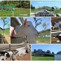 ヤギの家族 「のと里山海道」 別所岳サービスエリア