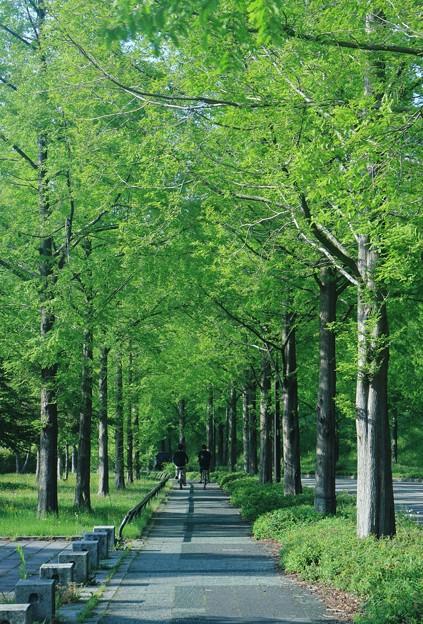 新緑の並木道を行く