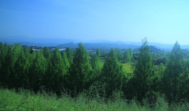 新緑のメタセコイアと山並み
