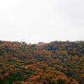 写真: 竹田城