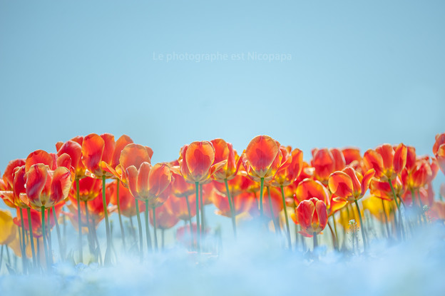 Photos: Flower's Dream.