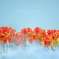 写真: Flower's Dream.