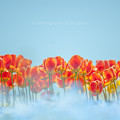 Flower's Dream.