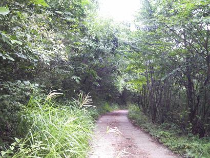 15.48 林道