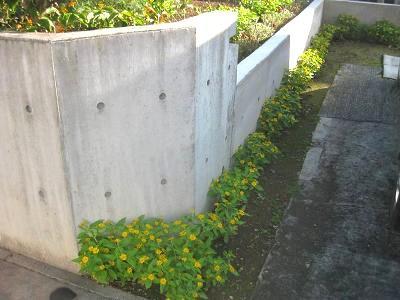 カーポート脇のコンクリートの両側にメランポジウム