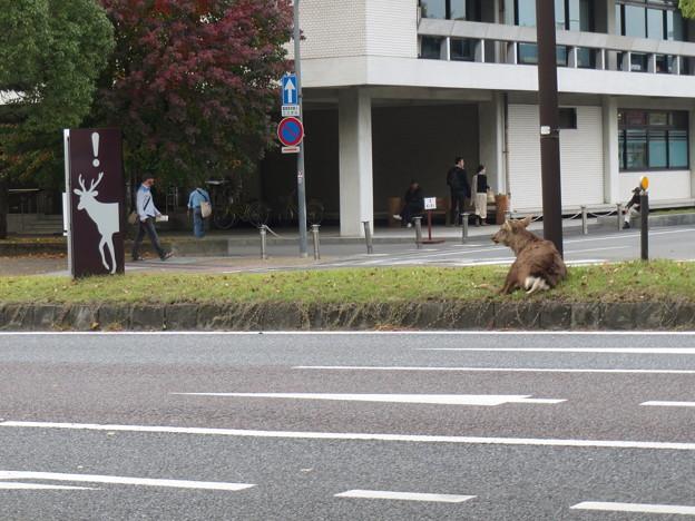 Photos: 鹿に注意!