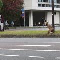 写真: 鹿に注意!