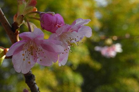 ももいろ みどり 春の色