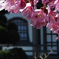 Photos: 寺に花