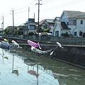 Photos: 鯉の遡上