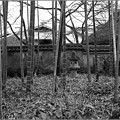 Photos: 冬竹