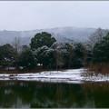 Photos: 冬の池