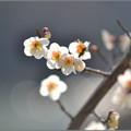 Photos: 残り香