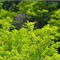 Photos: 新緑の歌