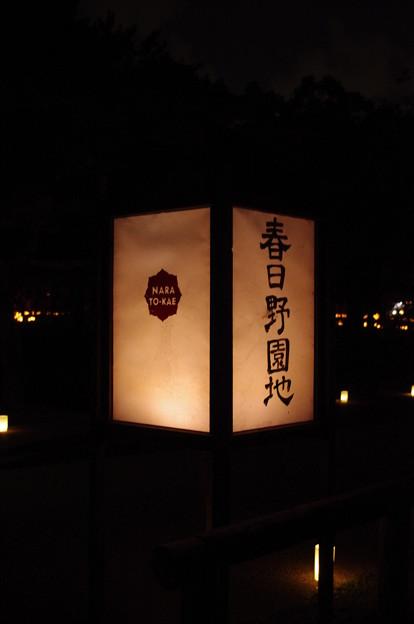 奈良燈花会2014(春日野園地)