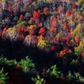 Photos: Autumn Colors 2014