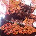 太山寺の秋