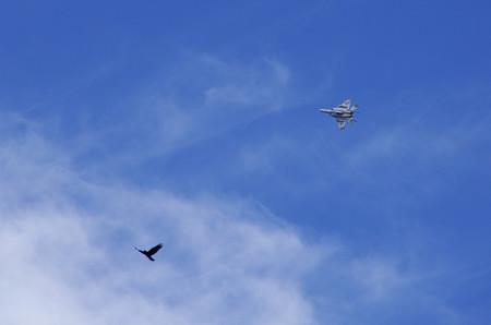起動飛行04_鳥とコラボ