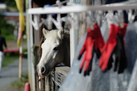 馬と赤い手袋-1480