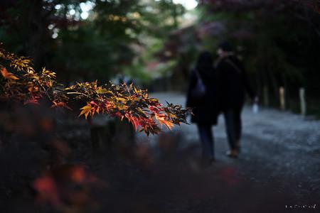 平林寺-3576_恋人たち