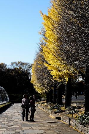 昭和記念公園-3743_銀杏並木