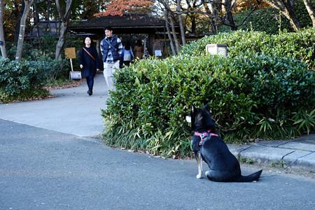 昭和記念公園-3809_忠犬