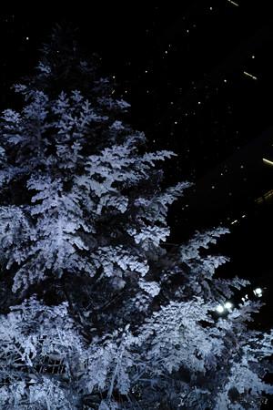 ホワイトクリスマス-3454