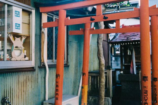 Rollei35試写 猫神社-010032