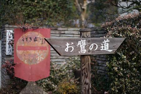 お鷹の道-01504