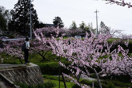 桃畑-5595