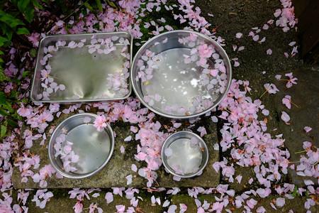 X70_-桜模様-0176