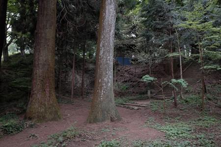 X70_-八王子城_12_巨木と神社への階段-0578