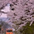 桜の中にオレンジの列車・・20140501