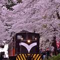 桜のトンネルくぐって出発ストーブ列車・・20140501