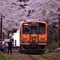Photos: 臨時列車・・走れメロス号 20140501