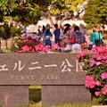 Photos: バラで盛り上がる横須賀ヴェルニー公園・・20140518
