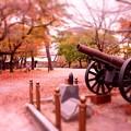 Photos: 撮って出し。。小倉城の歴史散歩と紅葉。。11月21日