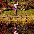 Photos: 静かな池に反射する君。。昭和記念公園20151115