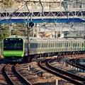 臨時列車で横須賀線を走行する山手線新型車両E235系。。保土ヶ谷駅 20151129