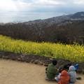写真: 撮って出し。。二宮の吾妻山公園の眺め。。菜の花 1月31日