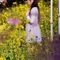 河津町の菜の花に白い一輪花。。20160221