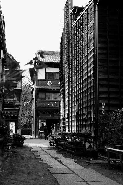 モノクロの風景。。昔の路地裏。。江戸東京たてもの園 20160313