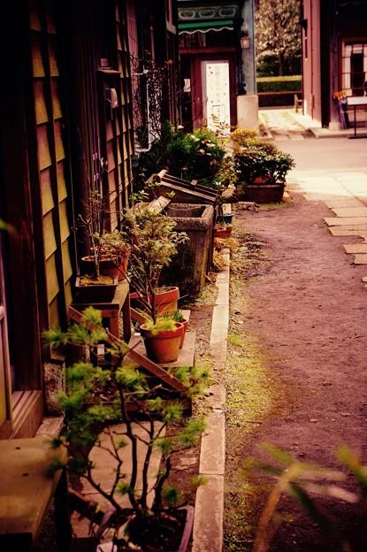 昔の玄関先に。。盆栽。。江戸東京たてもの園 20160313